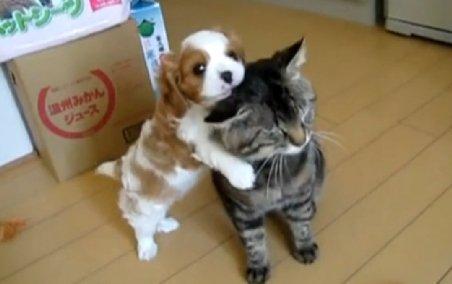 Câinele şi pisica, prieteni la cataramă. Vezi cum se înţeleg împreună