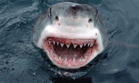 Panică pe coasta Australiei: Un surfer a fost sfâşiat în două de un rechin