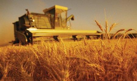 INS: Industria şi agricultura au înregistrat cea mai mare creştere în trimestrul al doilea