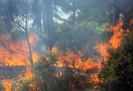 Opt hectare de pădure tânără, cuprinse de flăcări în judeţul Ilfov