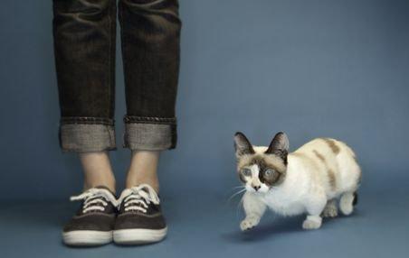 Fizz este cea mai scundă pisică din lume. Are doar 10 centimetri înălţime