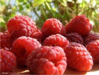"""Este sezonul fructelor de pădure. Vezi ce beneficii pot aduce """"medicamentele naturale"""""""