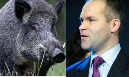 Un porc mistreţ l-a băgat pe Funeriu în sperieţi: Animalul, lovit de avionul în care se afla ministrul