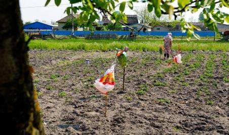 Agricultura românească, pe mâinile străinilor. S-a vândut deja 12% din terenul fertil al ţării