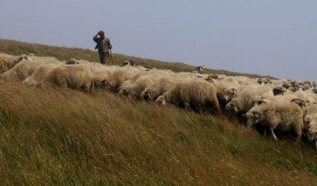 """Poveste din """"estul sălbatic"""": Un cioban din judeţul Iaşi, împuşcat de un consătean"""
