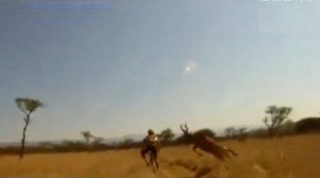 Antilopa bate bicicleta. Un ciclist a fost doborât de animal, într-o fracţiune de secundă
