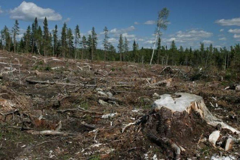 Mai mulţi preoţi ar putea ajunge la închisoare pentru defrişarea ilegală a pădurilor retrocedate