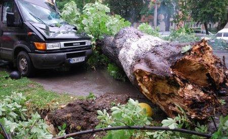 O familie argeşeană, la un pas de a fi strivită în propria casă de un copac căzut