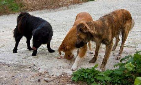 Flash mob impotriva eutanasierii cainilor fara stapan