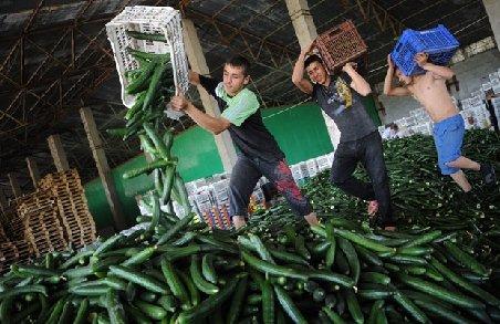 Agricultorii români şi bulgari, preferaţi de fermierii britanici. Sunt dezamăgiţi de cei din ţările care au aderat în 2004