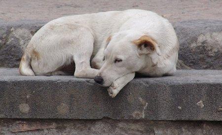 Legea câinilor comunitari, adoptată de Camera Deputaţilor. Vor putea fi eutanasiaţi cu acordul populaţiei