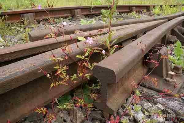 Un clujean care tracta o şină de cale ferată cu doi cai, cercetat pentru furt