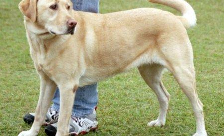 Apărătorii câinilor cer Curţii Constituţionale să blocheze Legea eutanasierii