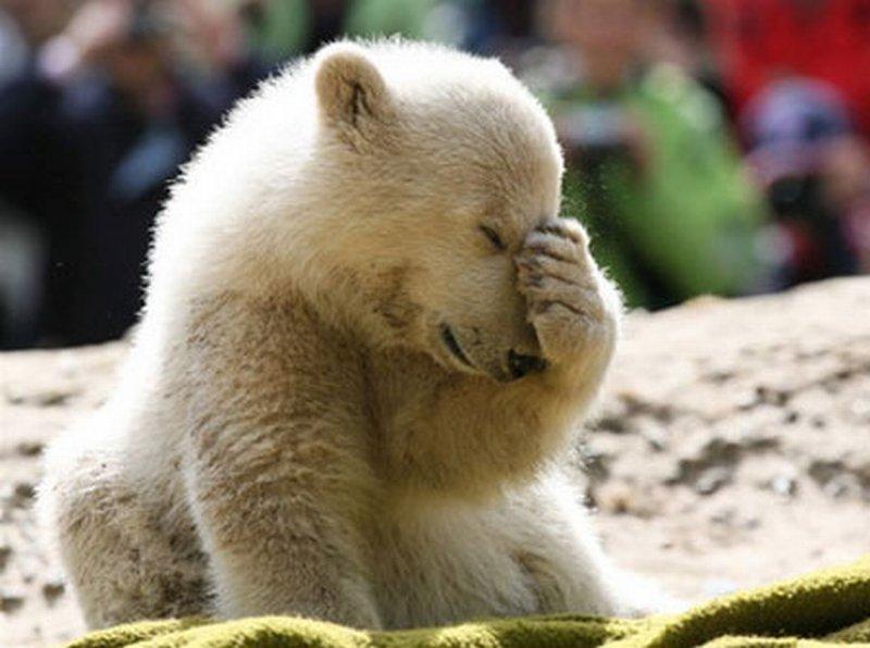 Un ochi râde iar un altul plânge. Revezi poveștile animalelor care ne-au înduioșat în 2011