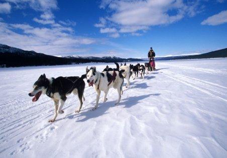 Harghita: Concurs de atelaje canine pe gheaţa de pe Lacul Roşu