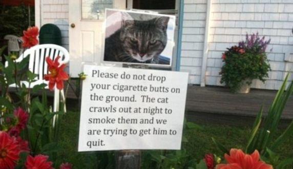 Pisica fumătoare, vecinul care şi-a pus parolă la net şi războiul rufelor. Cele mai amuzante bileţele