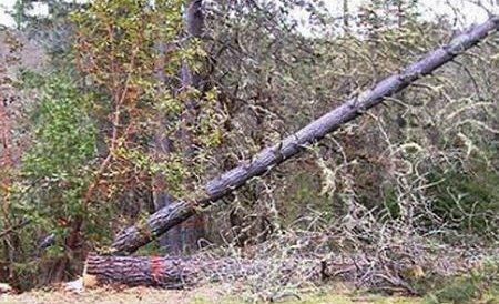 Un vâlcean a doborât 5 stâlpi de electricitate pe DN65 C după ce a tăiat un copac. Segmentul de drum este închis