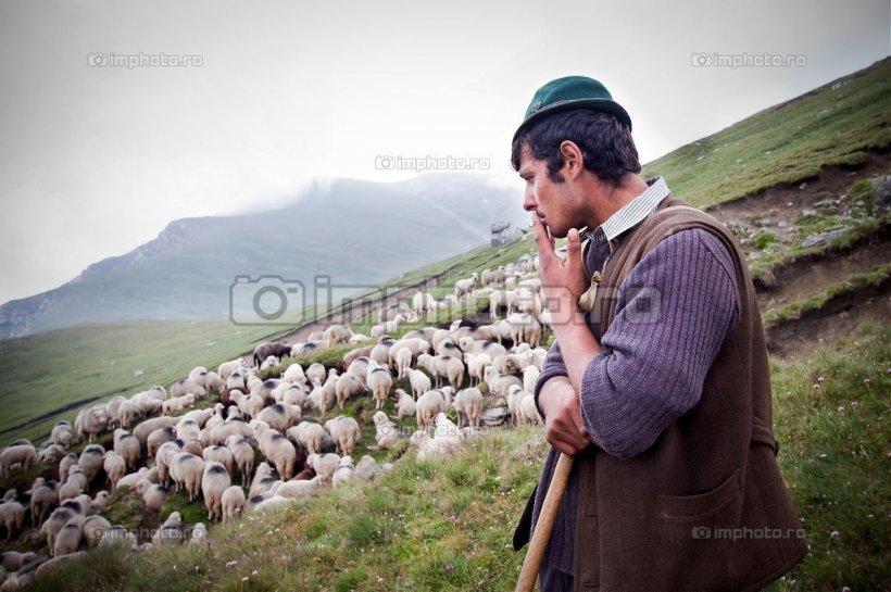 Incredibil.  Cioban şomer la 95 de ani