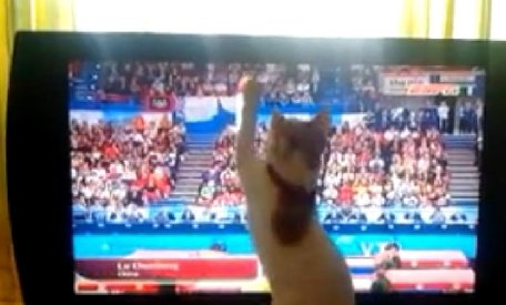 O pisică descoperă gimnastica, în faţa televizorului