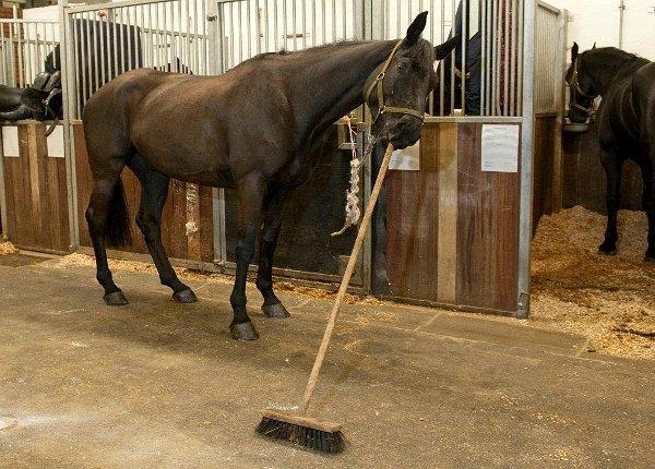 Un cal cu fixaţii de igienă sau foarte bine dresat - dă cu mătura în grajd