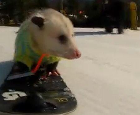 De necrezut! Vezi aici cel mai bun snowboarder OPOSUM