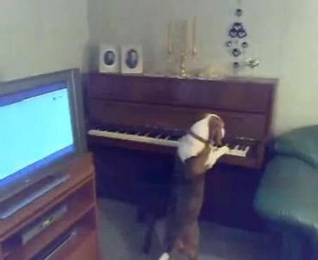 Adorabil: Un căine se joacă cântând la pian