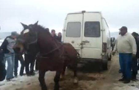 IMAGINI ŞOCANTE! Un cal a fost biciuit şi înhămat la un microbuz cu marfă