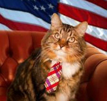 Faceţi cunoştinţă cu Hank, motanul care candideaza la senatul american