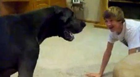 Nu doar câinii mici au chef de joacă. Vezi aici un uriaş zburdalnic