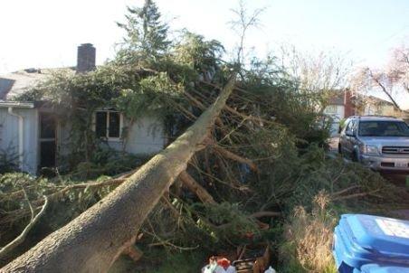 A vrut să taie un brad uriaş de teamă să nu îi cadă pe casă la o furtună. Ghiciţi ce s-a întâmplat?