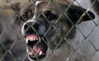 A fost dusă de urgenţă la spital după ce a fost sfâşiată de o haită de câini. Ar trebui luate măsuri mai drastice împotriva animalelor fără stăpân?