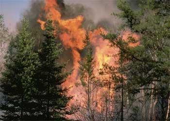 Focul a făcut prăpăd în mai multe rezervaţii naturale din ţară. Zeci de hectare de pădure, pârjolite până la rădăcină