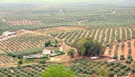 Tot mai mulţi greci care îşi pierd locurile de muncă devin agricultori pentru a scăpa de efectele crizei