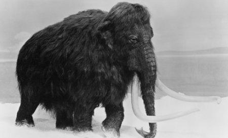 """Cel mai mic mamut identificat vreodată a trăit pe insula Creta. Un """"greu"""" veritabil la numai 1,13 m înălţime"""