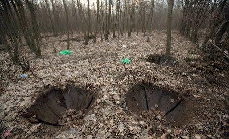 În România se taie trei hectare de pădure pe oră. Cât de mare este suprafaţa forestieră despădurită