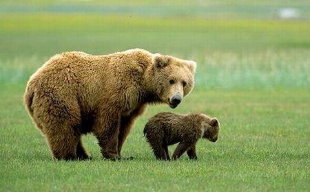 Un tânăr de 21 de ani a fost sfâşiat de urs, într-o pădure din Harghita