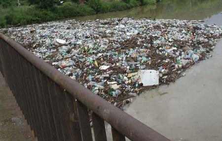 Cadavrele de animale şi tonele de gunoaie sufocă Dunărea