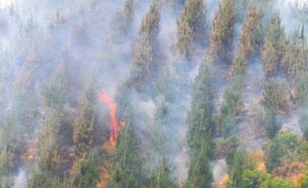 Flăcările au înghiţit zeci de hectare de vegetaţie din Harghita