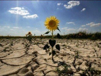 """""""Va fi foamete mare în ţară dacă nu plouă"""". Fermierii cer decretarea stării de calamitate în agricultură. Culturile agricole, în pericol din cauza secetei"""