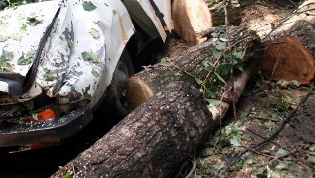 Circulaţia rutieră pe DN17 a fost blocată după ce un copac a căzut peste o maşină