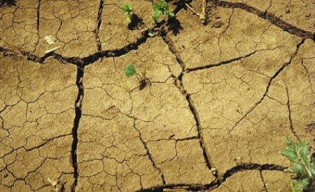 Culturi compromise de secetă în Buzău. Agricultorii renunţă la treierat, care costă mai mult ca recolta