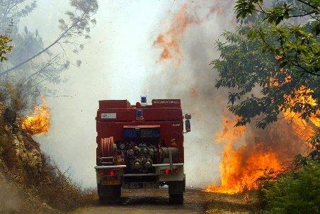 Incendiu puternic în Vaslui. 8,4 hectare de pădure de foioase şi conifere, cuprinse de flăcări