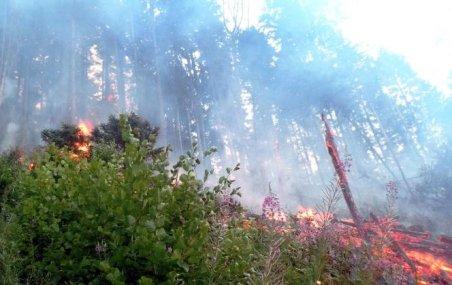 Incendiul din Prahova, care s-a extins pe 150 de hectare, stins de ploaie
