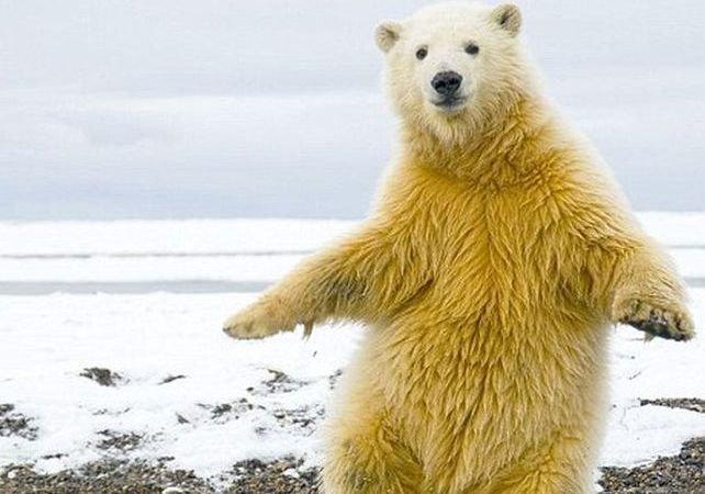 Heiiii, Macarena! Domnii care nu se pricep la dans ar putea lua lecţii de la el :)