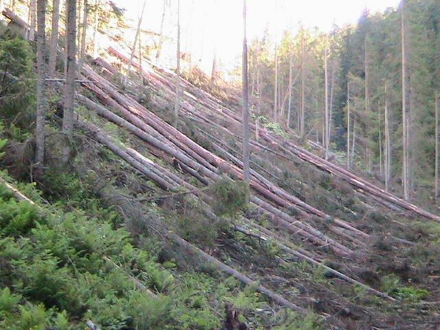 Când foamea de BANI distruge o ţară. Cum arată pădurile măcelărite din Munţii Harghitei