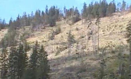 Lemnul românesc, un lux. Barbaria cu care s-au tăiat pădurile nu ţine cont de lege