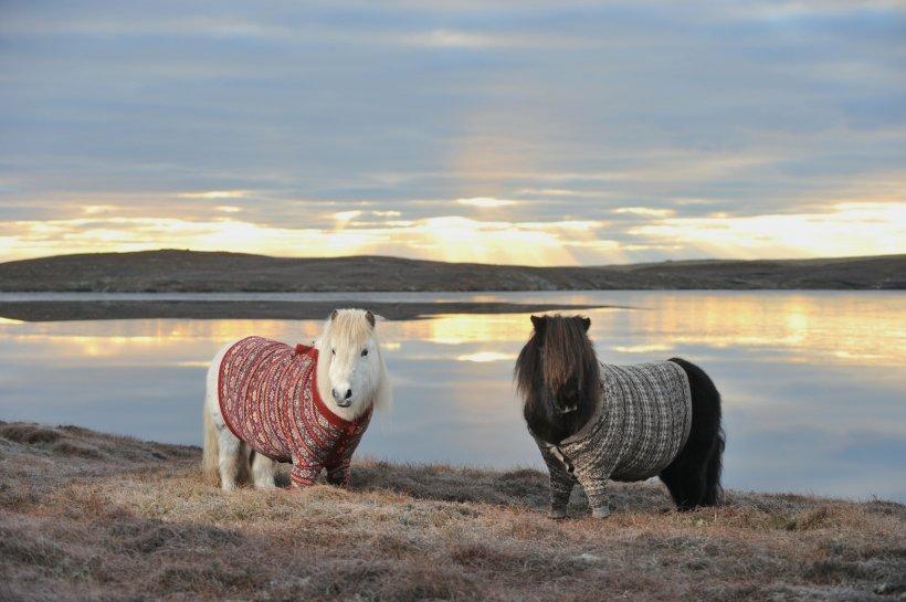 Doi ponei sunt vedetele care promovează turismul scoţian
