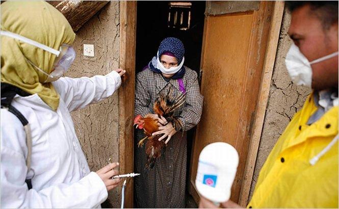 Gripa aviară ar putea reveni în forţă
