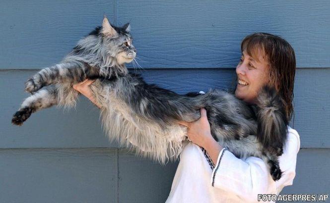 Cea mai lungă pisică din lume a încetat din viaţă