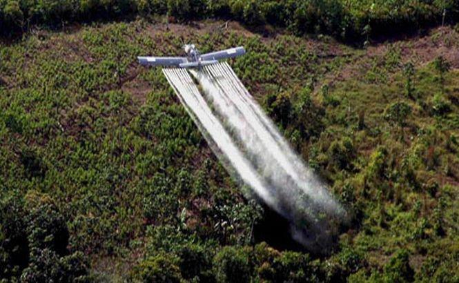 Rebelii columbieni cer legalizarea culturilor de coca şi marijuana